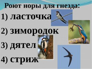Роют норы для гнезда: 1) ласточка 2) зимородок 3) дятел 4) стриж