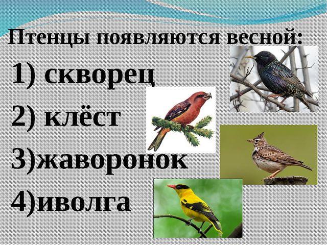 Птенцы появляются весной: 1) скворец 2) клёст 3)жаворонок 4)иволга