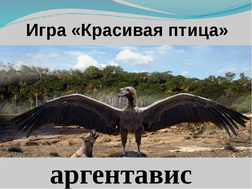 Игра «Красивая птица» аргентавис