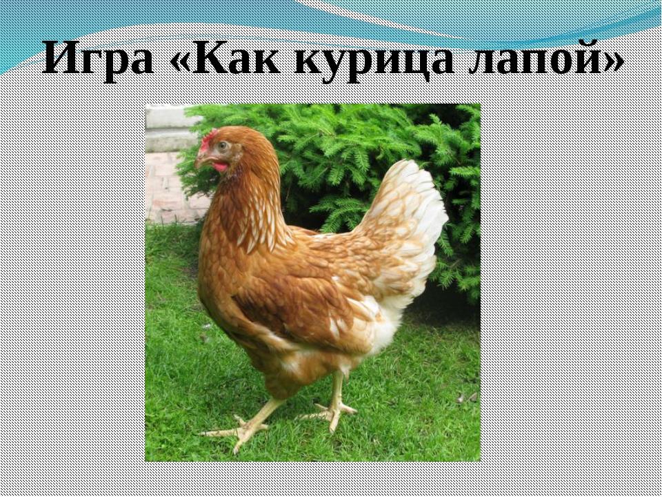 Игра «Как курица лапой»