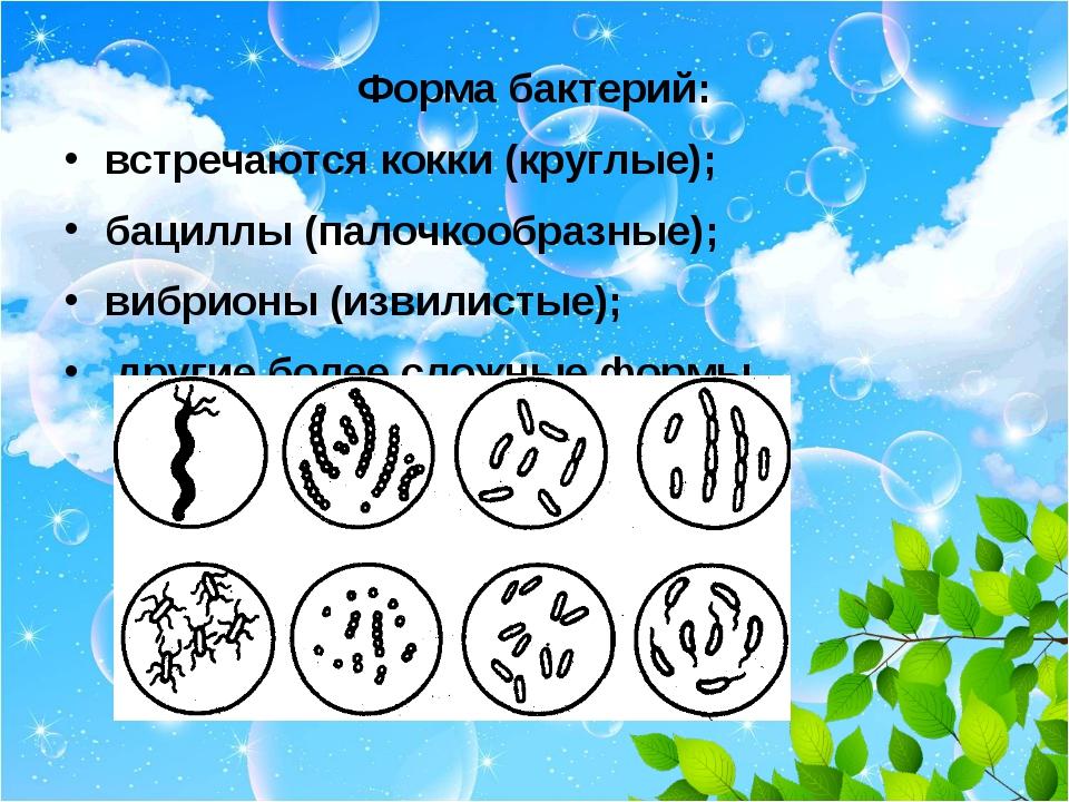 Форма бактерий: встречаются кокки (круглые); бациллы (палочкообразные); вибр...