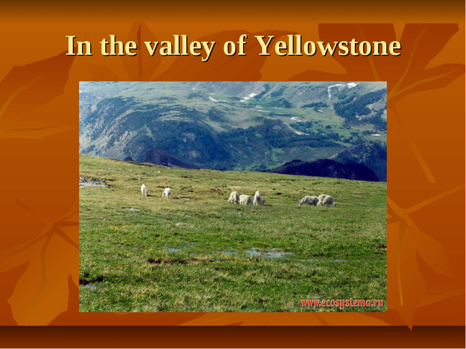In the valley of Yellowstone
