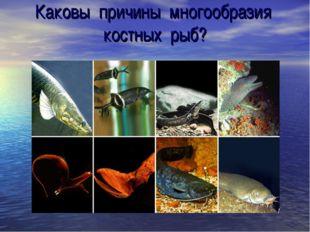 Каковы причины многообразия костных рыб?