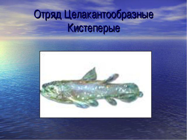 Отряд Целакантообразные Кистеперые
