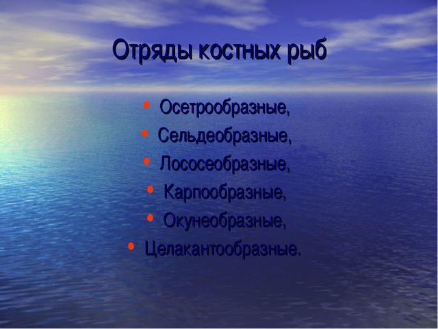 Отряды костных рыб Осетрообразные, Сельдеобразные, Лососеобразные, Карпообраз...