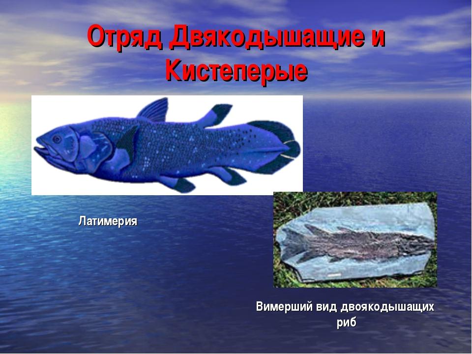 Отряд Двякодышащие и Кистеперые Латимерия Вимерший вид двоякодышащих риб