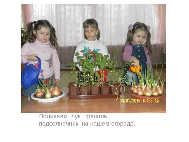 Поливаем лук , фасоль , подсолнечник на нашем огороде.