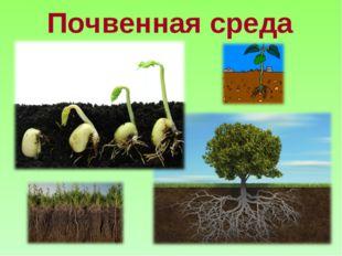Почвенная среда