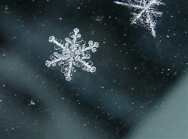 В Ленобласти выпал первый снег Петербургская газета