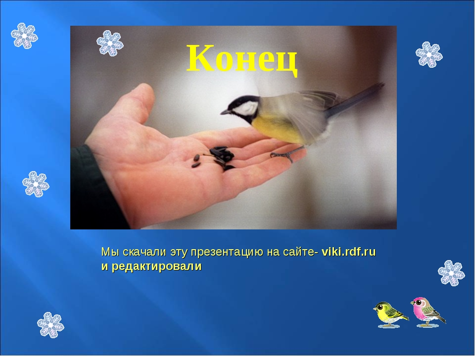 Открыток сыктывкаре, картинка с надписью спасибо за внимание с птицами