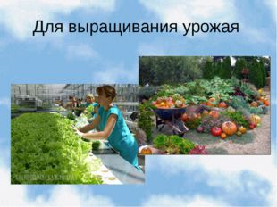 Для выращивания урожая