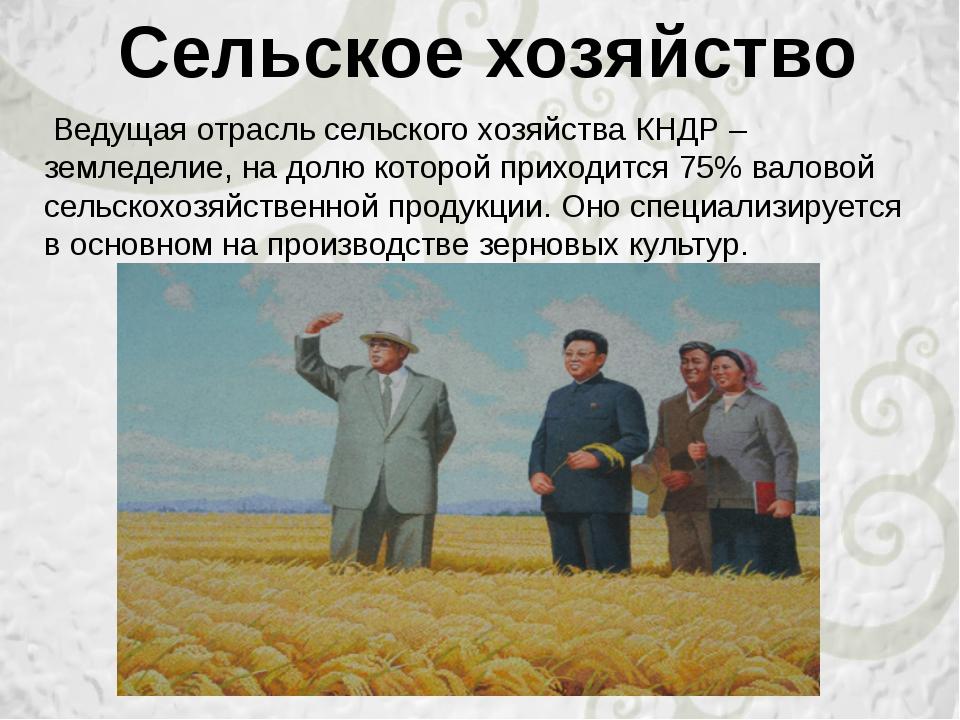Ведущая отрасль сельского хозяйства КНДР – земледелие, на долю которой прихо...