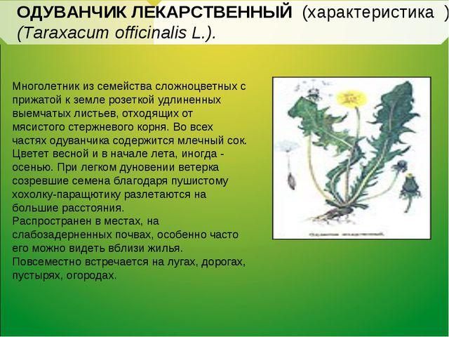 ОДУВАНЧИК ЛЕКАРСТВЕННЫЙ (характеристика ) (Taraxacum officinalis L.). Многоле...