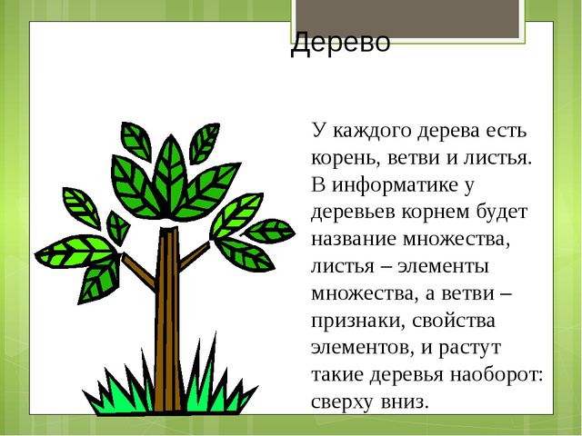 Дерево У каждого дерева есть корень, ветви и листья. В информатике у деревьев...