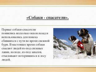 «Собаки - спасатели». Первые собаки-спасатели появились несколько веков назад