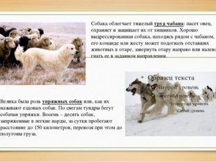 Велика была роль упряжных собак или, как их называют ездовых собак. По снегам