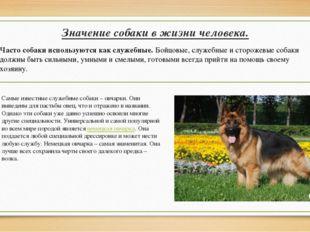 Значение собаки в жизни человека. Самые известные служебные собаки – овчарки.