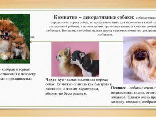 Комнатно – декоративныесобаки: собирательное определение пород собак, не пре