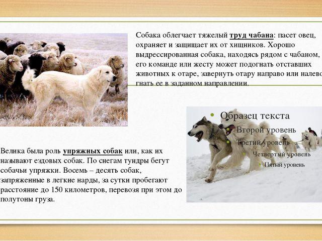 Велика была роль упряжных собак или, как их называют ездовых собак. По снегам...