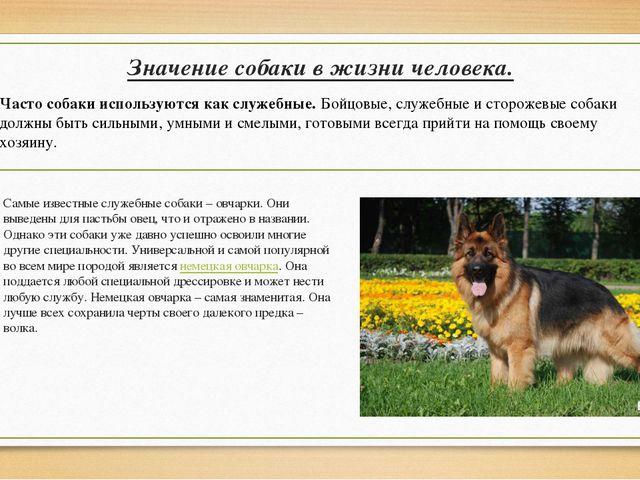 Значение собаки в жизни человека. Самые известные служебные собаки – овчарки....