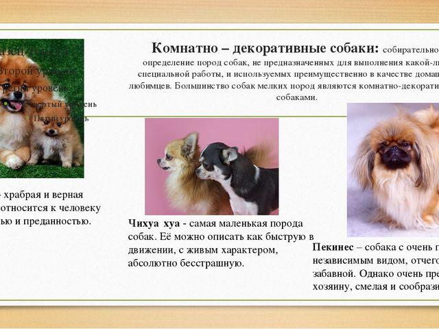 Комнатно – декоративныесобаки: собирательное определение пород собак, не пре...