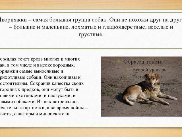 Дворняжки – самая большая группа собак. Они не похожи друг на друга – большие...