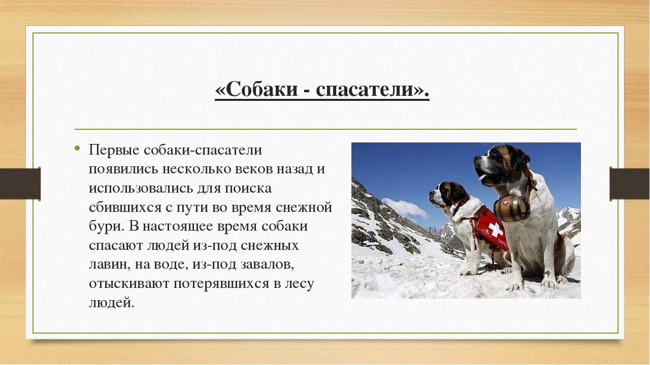 «Собаки - спасатели». Первые собаки-спасатели появились несколько веков назад...