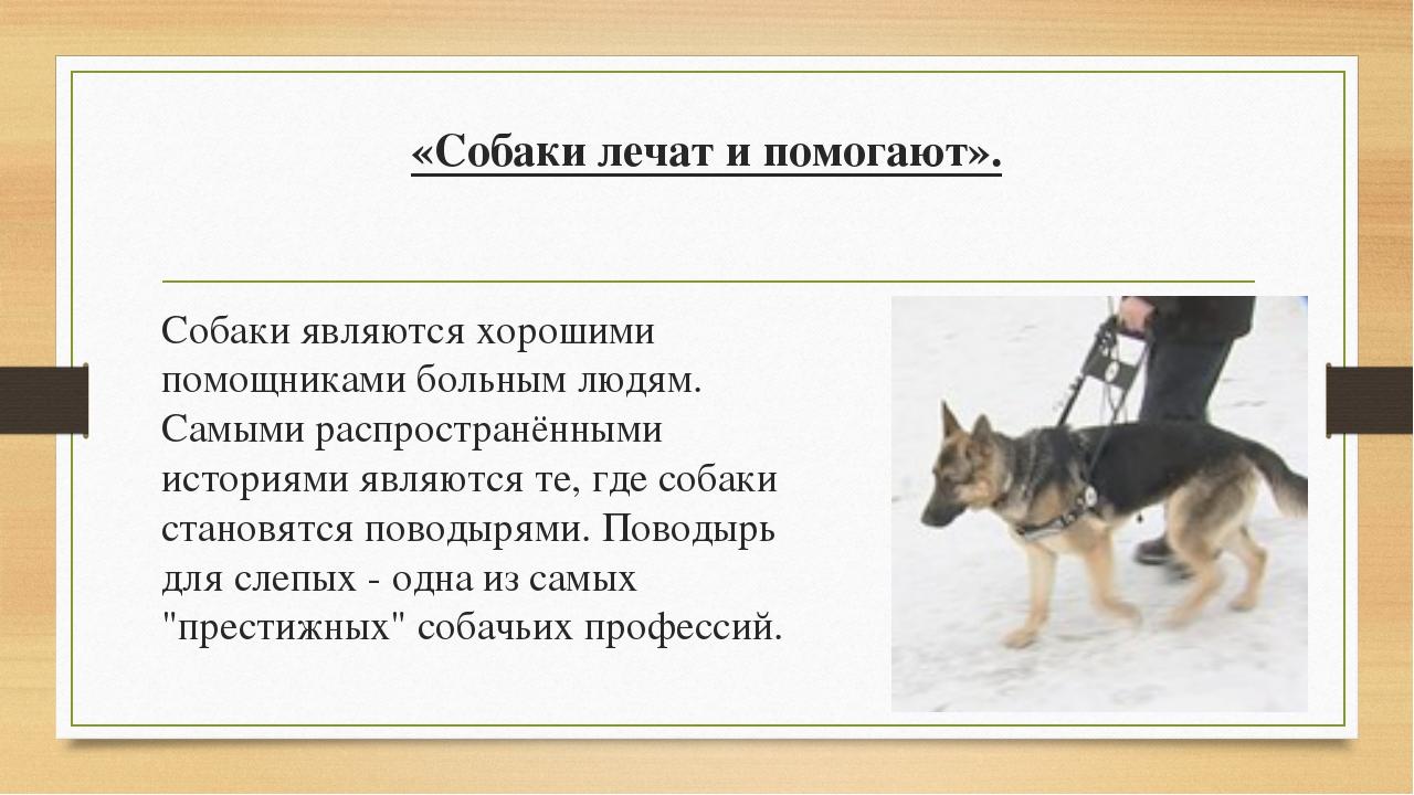 «Собаки лечат и помогают». Собаки являются хорошими помощниками больным людям...