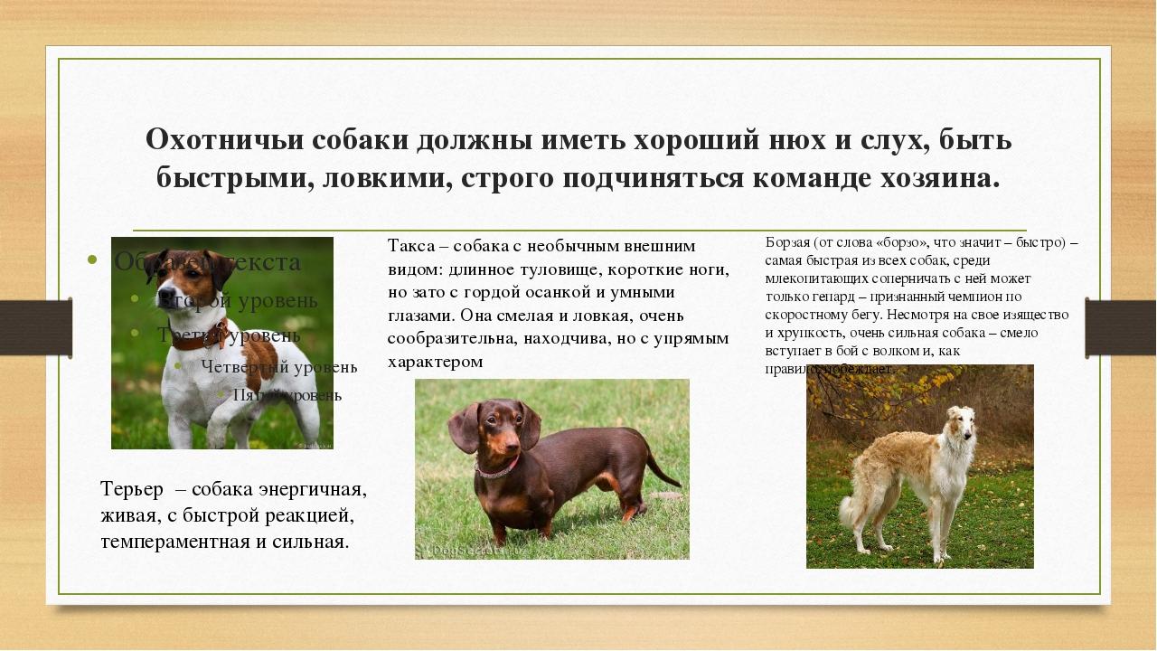 Охотничьисобаки должны иметь хороший нюх и слух, быть быстрыми, ловкими, стр...