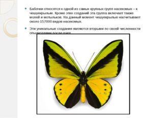 Бабочки относятся к одной из самых крупных групп насекомых – к чешуекрылым. К
