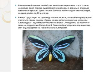 В основном большинство бабочек имеет короткую жизнь – всего лишь несколько дн