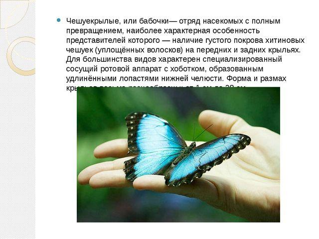 Чешуекрылые, или бабочки— отряд насекомых с полным превращением, наиболее хар...
