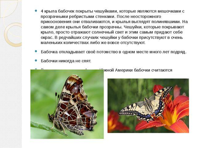 4 крыла бабочек покрыты чешуйками, которые являются мешочками с прозрачными р...