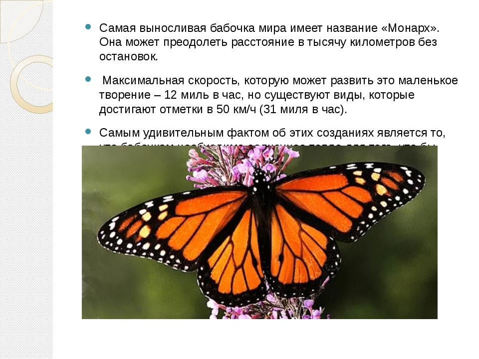 Самая выносливая бабочка мира имеет название «Монарх». Она может преодолеть р...