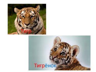 Тигр Тигрёнок
