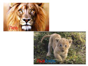 Лев Львёнок