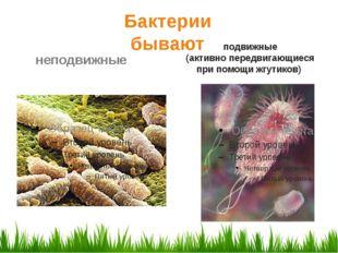 подвижные (активно передвигающиеся при помощи жгутиков) Бактерии бывают непо