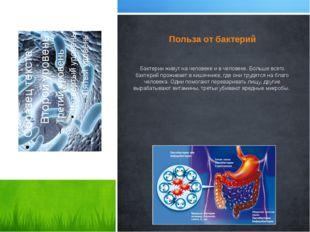 Польза от бактерий Бактерии живут на человеке и в человеке. Больше всего бакт