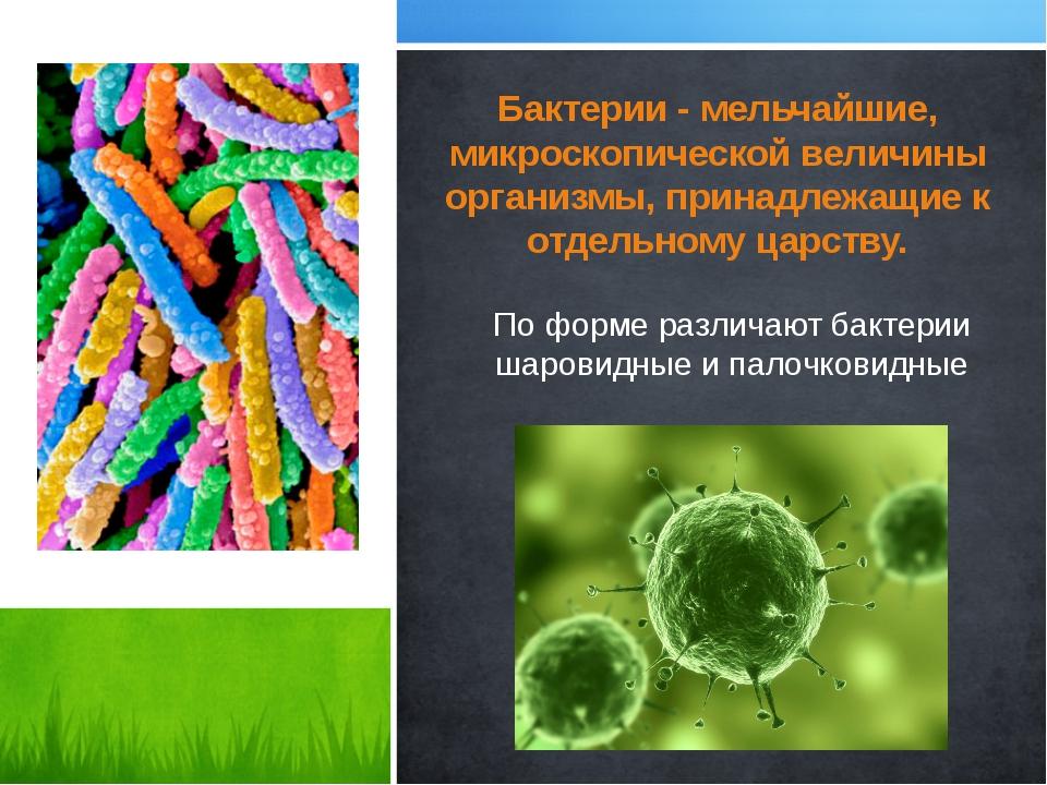 Бактерии - мельчайшие, микроскопической величины организмы, принадлежащие к о...