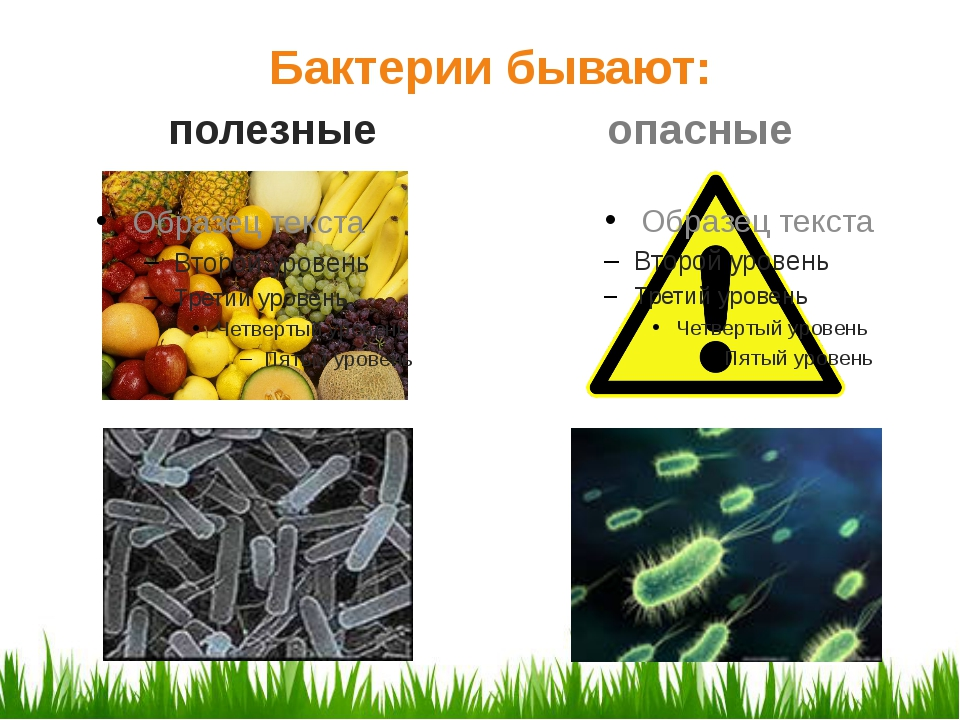 Бактерии бывают: полезные опасные