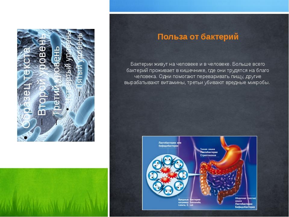 Польза от бактерий Бактерии живут на человеке и в человеке. Больше всего бакт...