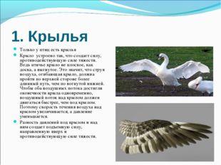 1. Крылья Только у птиц есть крылья Крыло устроено так, что создает силу, про
