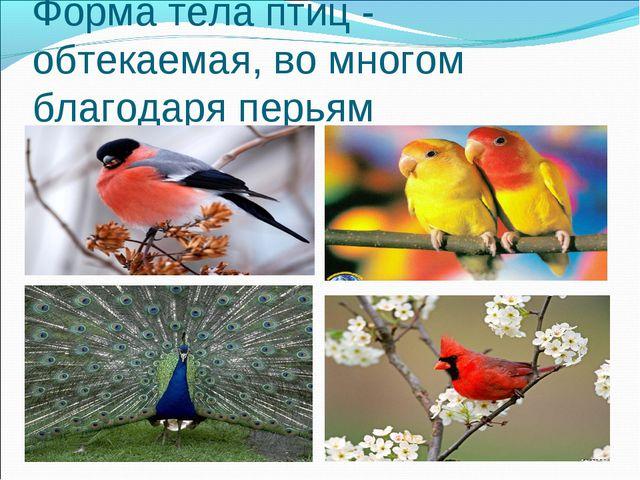 3. Форма тела Форма тела птиц - обтекаемая, во многом благодаря перьям