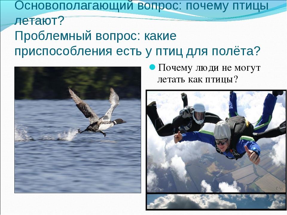 Основополагающий вопрос: почему птицы летают? Проблемный вопрос: какие приспо...
