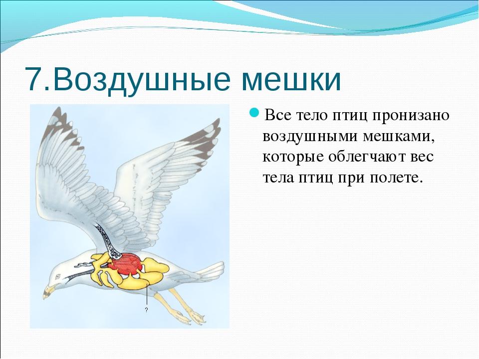 7.Воздушные мешки Все тело птиц пронизано воздушными мешками, которые облегча...
