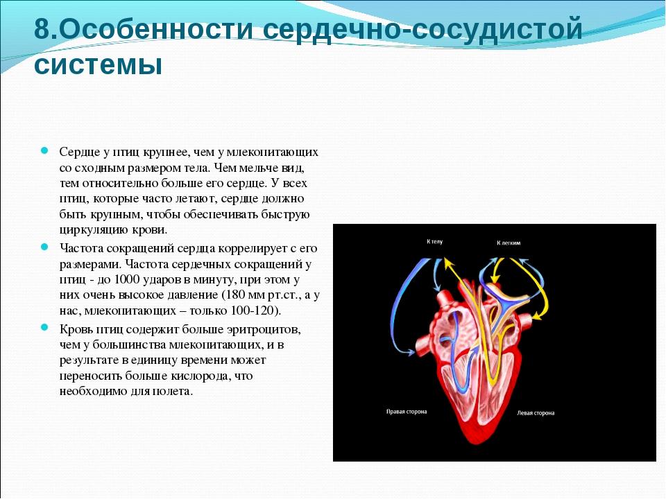 8.Особенности сердечно-сосудистой системы Сердце у птиц крупнее, чем у млеко...