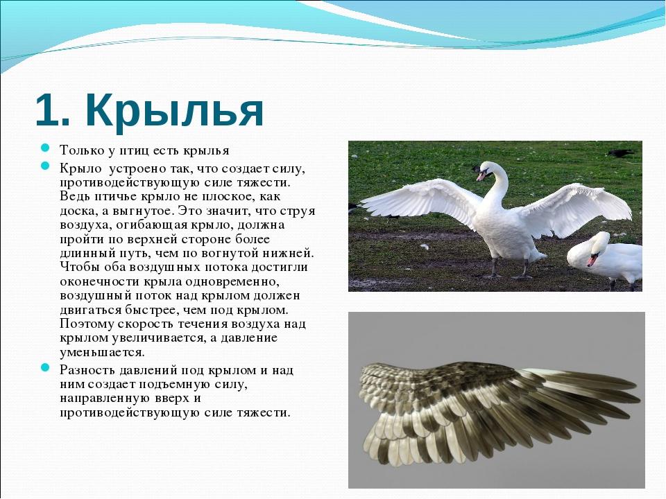 1. Крылья Только у птиц есть крылья Крыло устроено так, что создает силу, про...