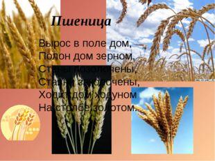 Пшеница Вырос в поле дом, Полон дом зерном, Стены позолочены, Ставни закол