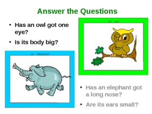 Has an owl got one eye? Is its body big? Has an elephant got a long nose? Are