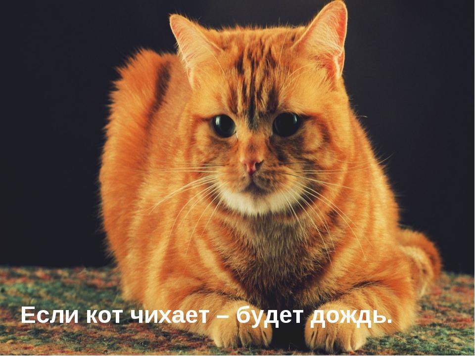 Если кот чихает – будет дождь.